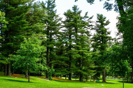 Gatineau park, photos from Mackenzie Estate Фото со стока