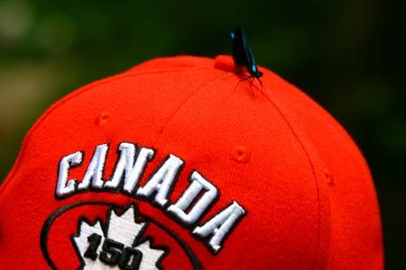 A moth celebrating Canada 150 anniversary at Gatineau park