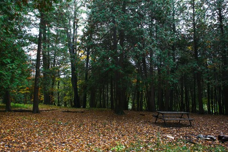 A bench in the middle of the woods at Victoria Park