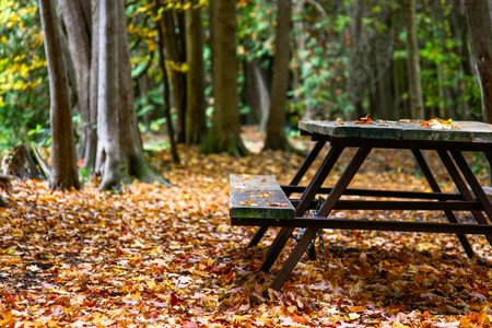 Bench will colourful leaves on the ground