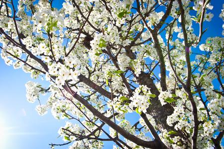 咲く春木 写真素材