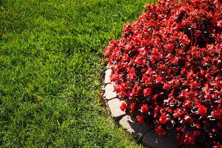 秋の赤、緑の花の色