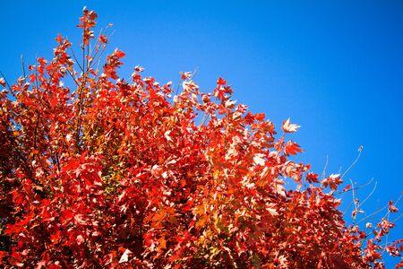 青空と紅葉します。