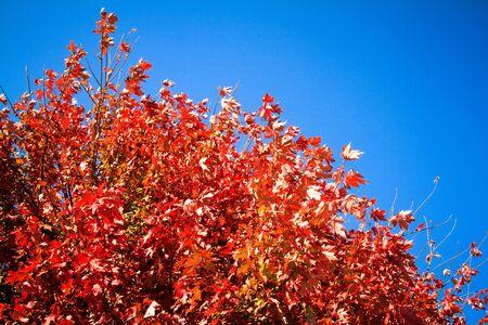 Fall Leaves Against the Blue Sky