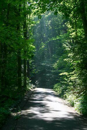 森の中の静かな田舎道 写真素材