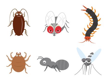 Schädliches Insekt
