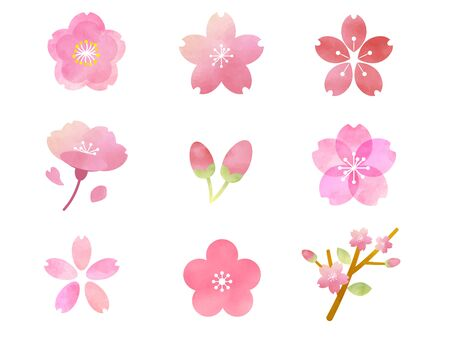 It is an illustration of a Sakura watercolor.