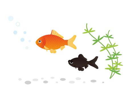 It is an illustration of a Goldfish set.