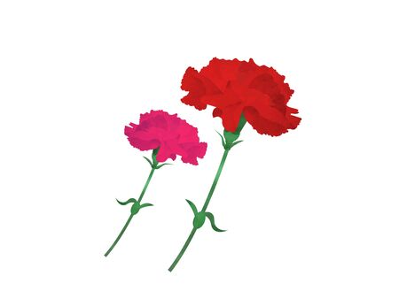 It is an illustration of a Carnation set.