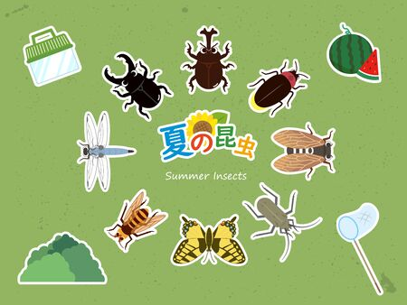 Summer insects. Illustration