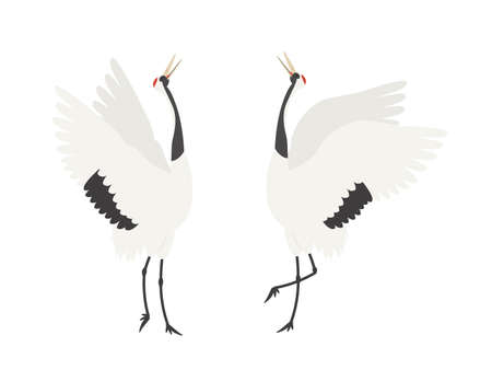 It is an illustration of a Crane courtship.