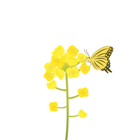 It is an illustration of a Canola flower.