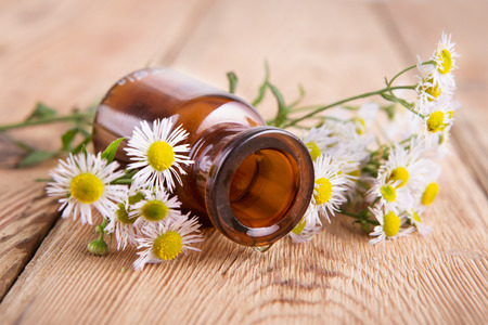 Drop of massage oil in a glass bottle with camomile flowers Stock Photo