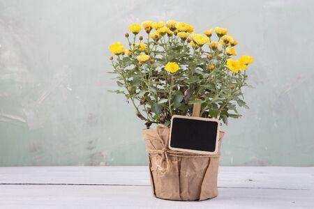 Beautiful  flowers in pot with blackboard
