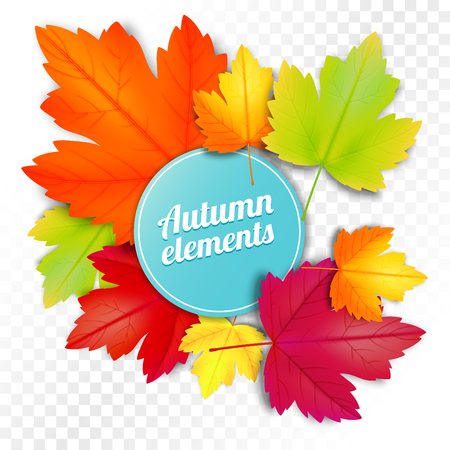 Set of autumn colored leaves on white and transparent background. Vector illustration template