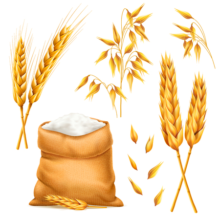 Vector set of wheat ears. Grains of cereals. Harvest and agriculture theme. Ingredient element. 3d illustration
