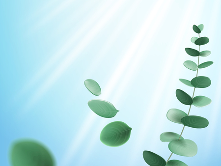 Branch of eucalyptus in sunlight beam or eucalypti twig with sun ray. Plant stem with leaves near shine or glow. Botanical and nature, natural medicine and organic theme