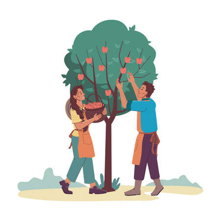 Gardeners man and woman gathering harvest from apple-tree isolated cartoon characters. Vector farmers in aprons collect fruits into basket. Agriculture and farming, family couple collecting apples