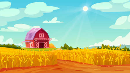 Farm barn house on yellow wheat field, summer scenery landscape with blue sky. Vector rural panorama of organic grains, rye or oats cereals, malts abundance fertility agriculture, forest on background