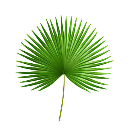 Exotic plant of palmetto flower, isolated tropical leaves of summer or spring. Flora and vegetation, botany bushes details of organic flowers. Bushes and jungle shrubs. Realistic 3d cartoon vector