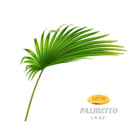 Tropical vegetation and exotic leafage, isolated bend or curved palmetto leaf. Flora of warm rainforest or jungles, summertime and spring seasonal blooming and growth. Realistic 3d cartoon vector