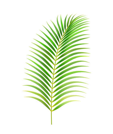 Palm tree leaves, decorative exotic flowers and plants. Small elongated flora with fleshy stem. Beach or seaside garden plant. Island vegetation summertime or spring. Realistic 3d cartoon vector