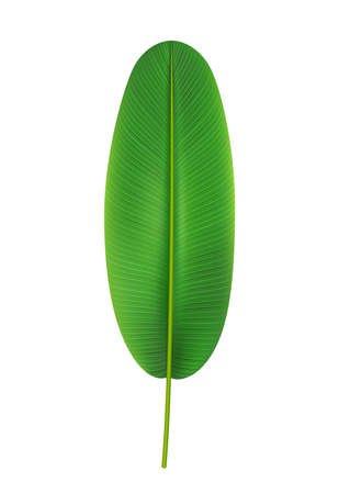 Elongated and rounded banana tree leaf, isolated tropical leafage and foliage. Exotic nature and vegetation, paradise and seaside aloha. Trendy botany and vegetation. Realistic 3d cartoon vector