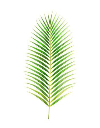 Exotic foliage and decoration of jungles and rainforests, isolated palm tree leaf. Straight flora of elongated shape. Twig or bush in warm spring or summertime season. Realistic 3d cartoon vector