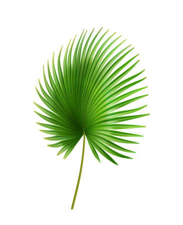 Exotic foliage, palmetto tropical leaves of plant with large size. Isolated bush outdoors decoration of rainforest or jungles. Sabal bermudana flora green vegetation. Realistic 3d cartoon vector