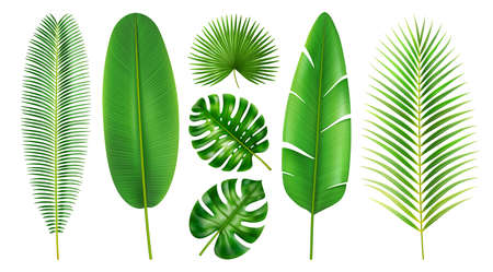 Exotic foliage and tropical leaves, isolated set of flora in different shapes and positions. Branches and leafage of beach, monstera and banana, palm and palmetto, realistic 3d cartoon vector 矢量图像