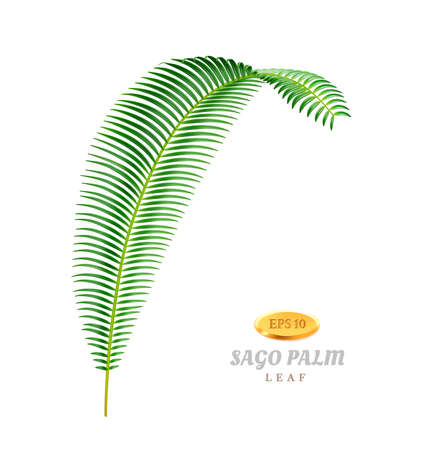 Tropical foliage of sago palm tree, isolated exotic botany nature of jungles and forests. Floral botanical biodiversity, shrubs or bushes of evergreen rainforest. Realistic 3d cartoon vector