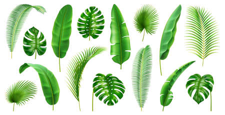 Exotic flora and vegetation of rainforests and jungles, isolated tropical leaves. Set of banana and palmetto, palm and monstera branches. Botany and decoration in realistic 3d cartoon vector