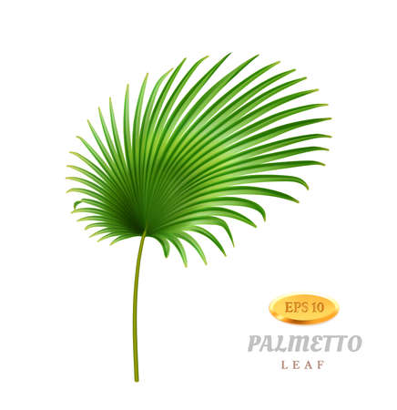 Tropical leaves and foliage, isolated exotic plant. Palmetto with wide leafage and fleshy stem. Hawaiian decoration, rainforest or jungle. Growth and blooming herb. Realistic 3d cartoon vector