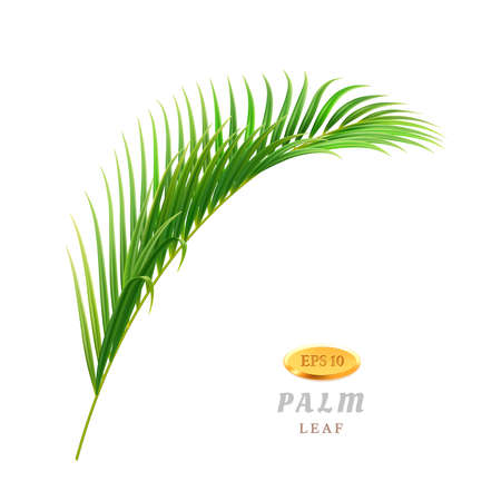 Exotic and tropical leaves and flowers, isolated flora of rainforests and jungles. Foliage and vegetation in warm climate, seaside or beaches. Hawaii theme plants. Realistic 3d cartoon vector 矢量图像