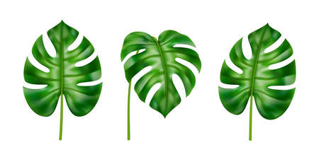 Exotic foliage of plants, houseplant in tropical style. Isolated leaves set in different positions. Summer and spring botany of jungles and subtropical climate forests. Realistic 3d cartoon vector 矢量图像