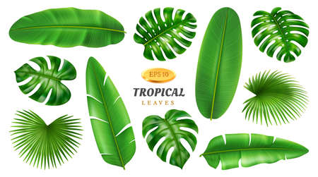 Exotic foliage and plants, flowers and vegetation of jungles and tropical forests. Isolated banana and palmetto, palm and monstera with holes on leaf. Botanic set realistic 3d cartoon vector 矢量图像