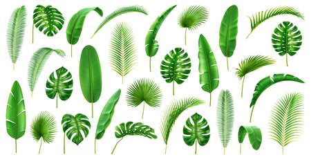 Tropical branches and leaves large collection. Isolated set of leafage of palms and palmetto, banana and monstera, jungles and foliage decor, vegetation of jungles. Realistic 3d cartoon vector Çizim