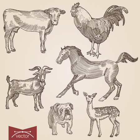 Engraving style pen pencil crosshatch hatching paper painting retro vintage vector lineart illustration domestic farm animals pets set. Goat and cow, horse, bulldog, lamb and rooster. Illustration