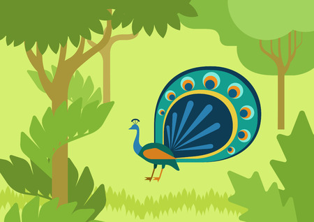 habitat: Peacock with flowing tail in forest habitat flat design cartoon vector wild animals birds. Flat zoo nature children collection. Illustration