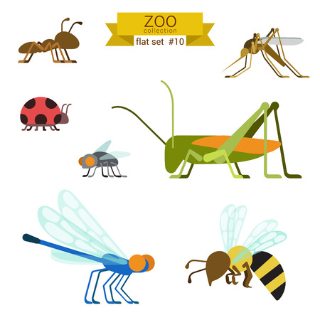Flat design vector insects and ants icon set. Ant, mosquito, ladybug, fly, grasshopper, locust, dragonfly, wasp. Flat zoo children cartoon collection.