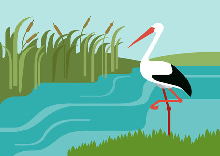Cigüeña en la orilla del río en cañas de diseño plano vector de la historieta animales salvajes pájaros. Piso colección naturaleza hijos zoológico.
