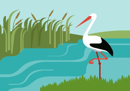 Stork on river bank in reeds flat design cartoon vector wild animals birds. Flat zoo nature children collection.