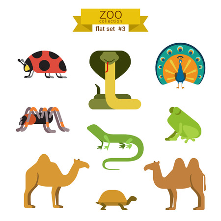 tarantula: Flat design vector animals icon set. Ladybug, cobra, snake, peacock, spider, tarantula, lizard, frog, camel, tortoise. Flat zoo children cartoon collection. Illustration