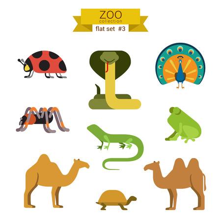 tarantula: Flat design vector animals icon set. Ladybug, cobra, snake, peacock, spider, tarantula, lizard, frog, camel, tortoise. Flat zoo children cartoon collection. Illustration
