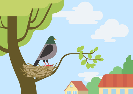 bird and tree: Pigeon (male dove) on street tree branch nest flat design cartoon vector wild animals birds. Flat zoo nature children collection.