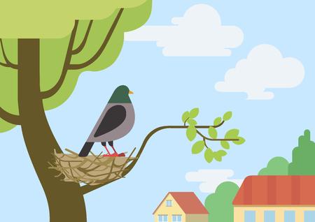 birds nest: Pigeon (male dove) on street tree branch nest flat design cartoon vector wild animals birds. Flat zoo nature children collection.