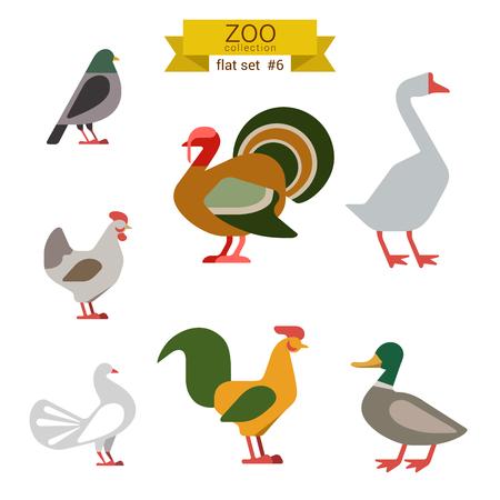 pato caricatura: Diseño plano pájaros vector conjunto de iconos. Dove, pavo, ganso, pollo, gallo, pato. Colección de dibujos animados los niños zoológico plana.