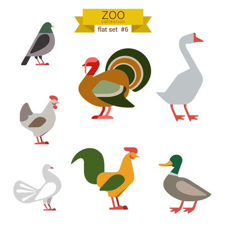 Flat design vector birds icon set. Dove, turkey, goose, chicken, rooster, duck. Flat zoo children cartoon collection.