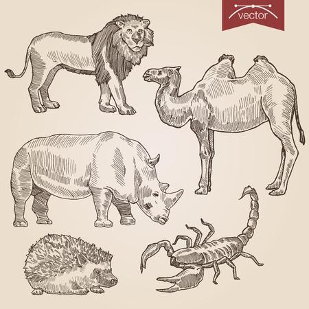 Engraving style pen pencil crosshatch hatching paper painting retro vintage vector lineart illustration wild animals set. Lion camel rhino hedgehog scorpio. Illustration