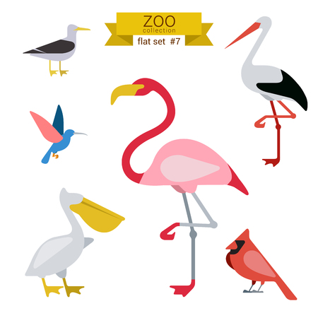 cicogna: Piatto disegno vettore uccelli set di icone. Gabbiano, colibr�, fenicottero, cicogna, pellicani. Appartamento bambini zoo cartoon raccolta. Vettoriali